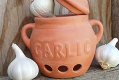 Garlic bulbs. In clay pot stock image