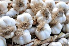 Garlic bulbs Royalty Free Stock Photos