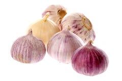Garlic bulbs Royalty Free Stock Image