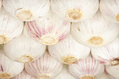 Garlic Bulbs Abstract Underside View Royalty Free Stock Photo