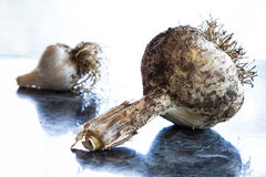 Garlic bulbs (Allium). Freshly harvested garlic bulbs from the backyard garden, the pleasures of your own vegetable garden, simple ingredients to enhance the Royalty Free Stock Images