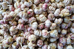 Garlic bulbs   Stock Photo