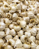 Garlic bulbs background Stock Image
