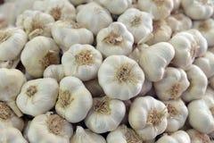 Garlic bulbs background Stock Image