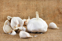 Garlic bulbs on burlap Royalty Free Stock Photography