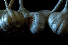 Garlic bulbs close up royalty free stock photos