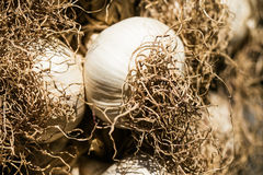Garlic bulbs close up hanging on a street market Royalty Free Stock Photo