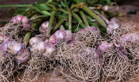 Garlic bulbs and cloves on wooden background.  Stock Photography