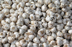 Garlic bulbs. Food and drink Royalty Free Stock Photography