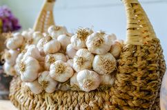 Garlic bulbs, fresh garlic in Wicker basket. Royalty Free Stock Photography