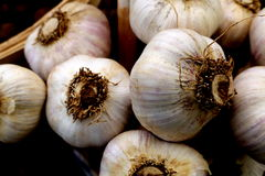 Garlic Bulbs. Fresh, organic garlic bulbs.  The edible bulb or head grows beneath the ground. This bulb is made up of sections called cloves, each enclosed in Stock Photo