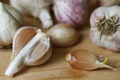 Garlic bulbs and garlic clove Stock Photography