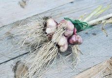 Garlic bulbs and garlic cloves on rustic wooden background. Garlic bulbs and garlic cloves on gray rustic wooden background Royalty Free Stock Photos