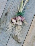 Garlic bulbs and garlic cloves on rustic wooden background. Garlic bulbs and garlic cloves on gray rustic wooden background Stock Photography