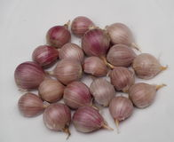 Garlic Bulbs Royalty Free Stock Photography