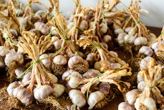 Garlic bulbs and pods Royalty Free Stock Photography