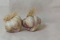 Garlic bulbs. Purple garlic bulbs on a canvas background Royalty Free Stock Photography