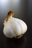 Garlic bulbs Roasted Stock Image