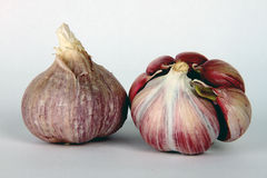 Garlic Bulbs Showin Garlic Cloves Stock Image