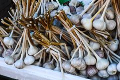 Garlic bulbs on Stems Fresh Food autumn background. Piles of garlic bulbs on stems at the market stock image
