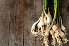 Garlic bulbs on wood kitchen top Royalty Free Stock Photos