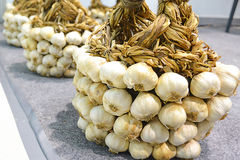 Garlic. Bunch of garlic bulbs. Garlic arrange into basket stock photography