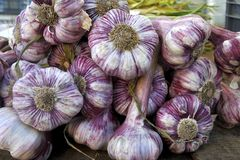Garlic bunch Royalty Free Stock Photos
