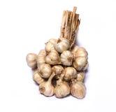 Garlic bunch Royalty Free Stock Image