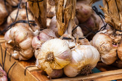 Garlic bunches in a farmers market Stock Photography