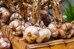Garlic bunches in a farmers market Stock Image