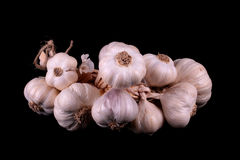 Garlic bundle Stock Image