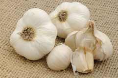 Garlic on burlap Royalty Free Stock Images