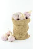 Garlic in burlap bag. Stock Photo