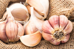 Garlic in canvas sack Royalty Free Stock Photo