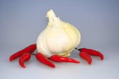 Garlic chili Royalty Free Stock Images