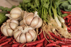 Garlic, chilli, coriander, background, vegetable. royalty free stock image
