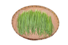 garlic chive in threshing basket isolated on white Stock Images