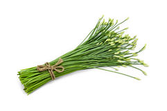 Garlic chive in threshing basket isolated on white Royalty Free Stock Image