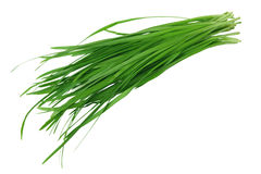 Garlic Chives Stock Photography