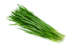 Garlic chives Royalty Free Stock Image