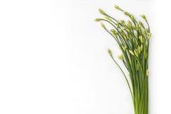 Garlic Chives Royalty Free Stock Photography