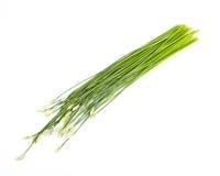 Garlic chives Royalty Free Stock Photos