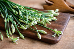 Garlic chives or Allium tuberosum on wooden table. Background Royalty Free Stock Photos