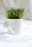 Garlic Chives Stock Images