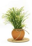Garlic chives Stock Image