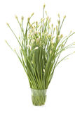 Garlic Chives in A Glass Royalty Free Stock Photography