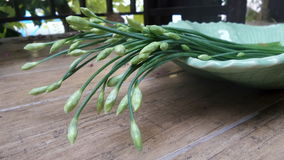 Garlic Chives. Impart oniony flavor with a distinctly garlicky overtone. Young leaves are most tender  for Asian cooking Royalty Free Stock Photo