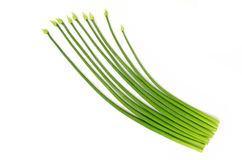 Garlic chives isolate on white background Stock Images