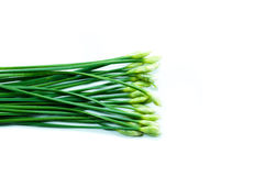 The garlic chives isolated Royalty Free Stock Photo