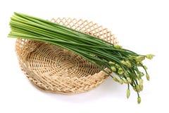 Garlic Chives Royalty Free Stock Photo
